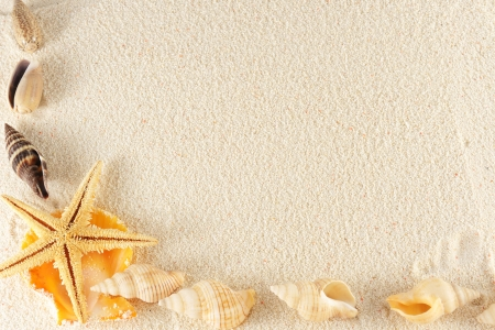 Group of seashells, starfishes on the sand Stock Photo - 13927291