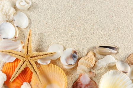 Group of seashells, starfishes on the sand