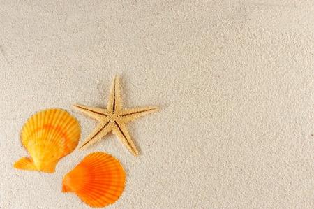 starfish beach: Starfish and shells on the sand of the beach