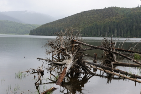 Fallen dead tree in the lake in Shangri-La national park, Yunnan province, China photo