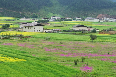 dwell house: Landscape of tibetan village in rural area of Shangri-La county,Yunnan province, China