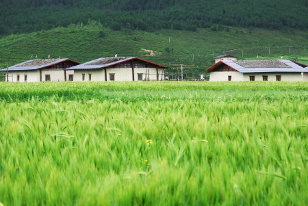 Tibetan residential building in rural area of Shangri-La county,Yunnan province, China photo
