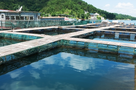 aquaculture: Aquatic farm on the lake under sunshine
