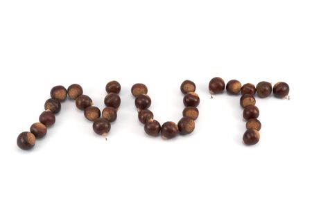 nut word spelled of chestnut groups on white background Stock Photo - 17385272