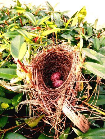 nido de pajaros: nido de las aves silvestres