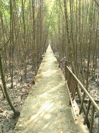 mangrove: Mangrove forest reserve Stock Photo