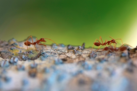 fourmis d�composant r�sist� arbre,
