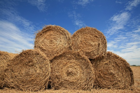 Rolls of hay in the autumn field with blue sky as background Stock Photo