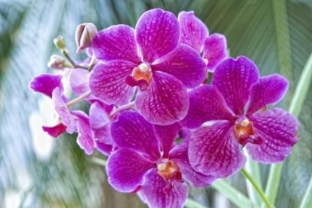 Orcid Violet en arri�re-plan vert Banque d'images
