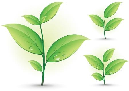 Collection de branches vertes, isol� sur fond blanc Illustration