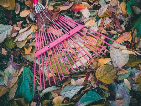 Close up of metal fan rake lie on pile of colorful dry leaves Banco de Imagens