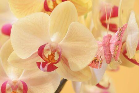 orhid photo