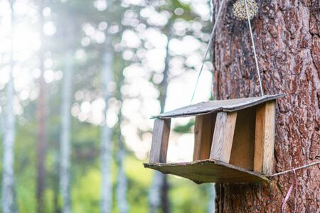 bird feeder on a tree in the forest.