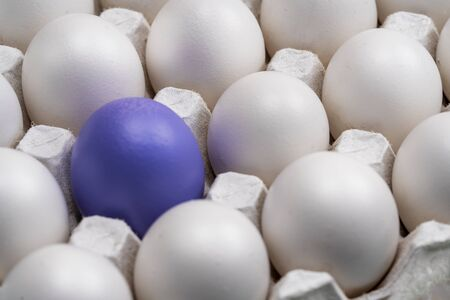 White chicken eggs in cells, and one purple egg is highlighted in the group. symbol of individuality. concept for Easter. symbol of individuality. concept for Easter