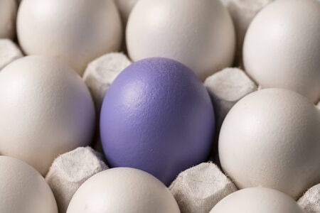 one colored purple blue Easter egg surrounded by white eggs, close-up. White crow. symbol of individuality. concept for Easter 版權商用圖片