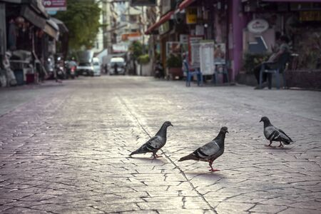 three pigeons freely walk along the atmospheric sidewalks of paving stones, on a deserted city cozy street. Evening city landscape, soft focus Reklamní fotografie