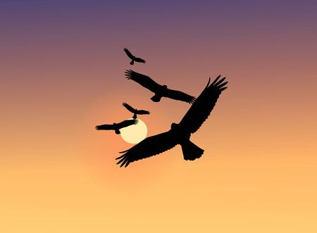 Image of flying eagles during sunset in the desert photo