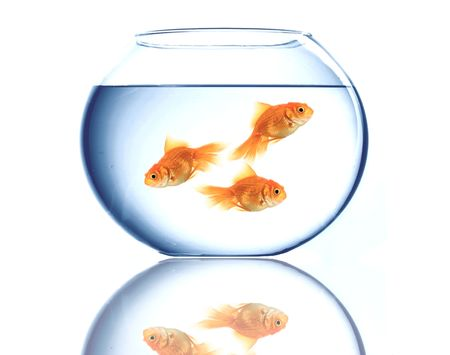 Image of three fish in a big bowl photo