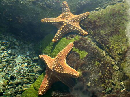 echinoderm: Marine life in an aquarium for our viewing