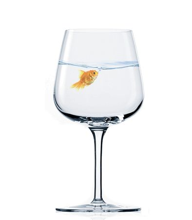 Image of goldfish inside wine glass with clear water photo
