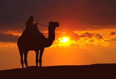 일몰 동안 사막에서 낙타