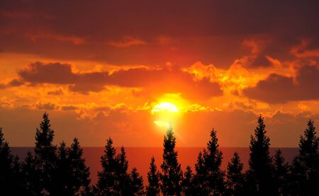 Forest Trees And Sunrise photo