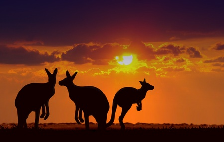 aussie: kangaroos under sunset Stock Photo