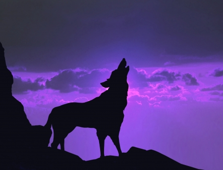 Wolf howling on mountain cliff photo