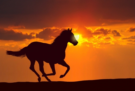 Horse running under sunset