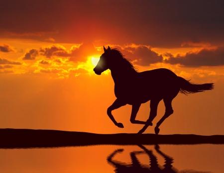 水の反射と日没時に動いている馬 写真素材