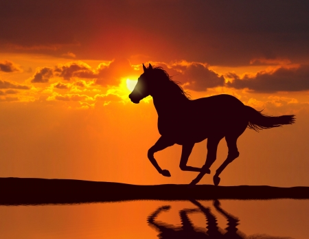 Horse running during sunset with water reflection photo
