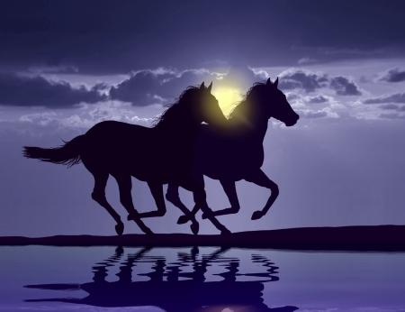 水の反射と日没で実行している馬 写真素材 - 20362905