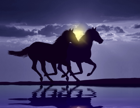Horses running at sunset with water reflection photo