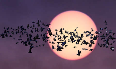 Flying birds over the sunset 写真素材