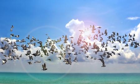 Flying birds over the ocean Banco de Imagens