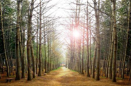 日の出中にフォレスト内のツリー