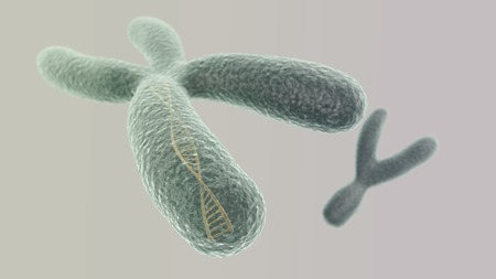 chromosome x y: CGI visualization of the X chromosome with DNA helix inside and Y (electronic microscope simulation) with focus effect (light version) Stock Photo