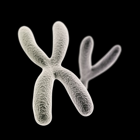 ovule: CGI visualization of the X and Y chromosomes (X front)(electronic microscope simulation) with focus effect (black version) Stock Photo