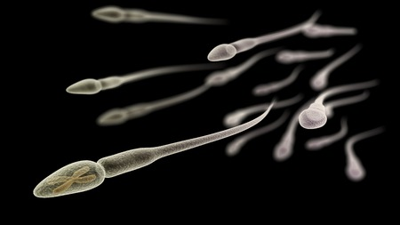 sperm cell: CGI visualization of the sperm with X chromosome (electronic microscope simulation) with focus effect (black version) Stock Photo