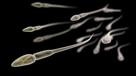 espermatozoides: Visualización CGI de los espermatozoides con cromosoma X (simulación microscopio electrónico) con efecto de enfoque (versión en negro)