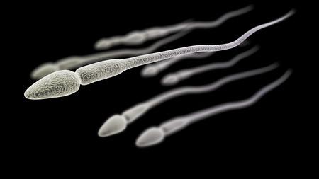 espermatozoides: Visualización CGI de los espermatozoides (simulación microscopio electrónico) con efecto de enfoque (versión en negro)