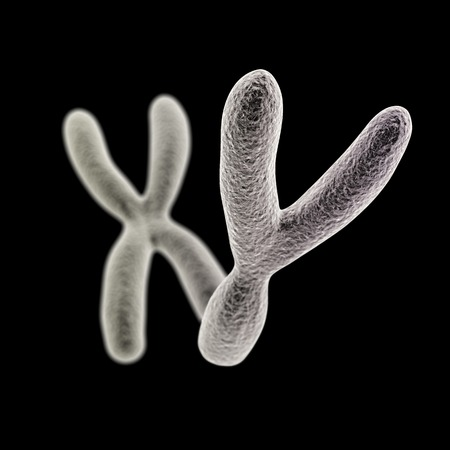 espermatozoides: Visualización CGI de los cromosomas Y y X (delantero y) (simulación microscopio electrónico) con efecto de enfoque (versión en negro)