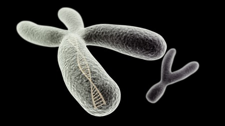 sperm cell: CGI visualization of the X chromosome with DNA helix inside and Y (electronic microscope simulation) with focus effect (black version)