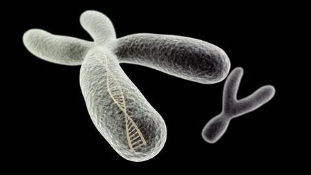 cromosoma: Visualización CGI del cromosoma X con hélice de ADN en el interior e Y (simulación microscopio electrónico) con efecto de enfoque (versión en negro)