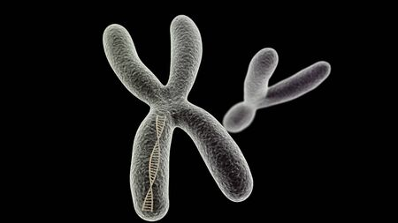 chromosome x y: CGI visualization of the X chromosome with DNA helix inside and Y (electronic microscope simulation) with focus effect (black version)