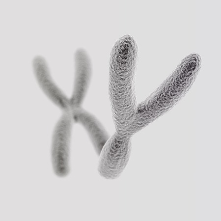 sperm cell: CGI visualization of the Y and X chromosomes (Y front)(electronic microscope simulation) with focus effect (light version)