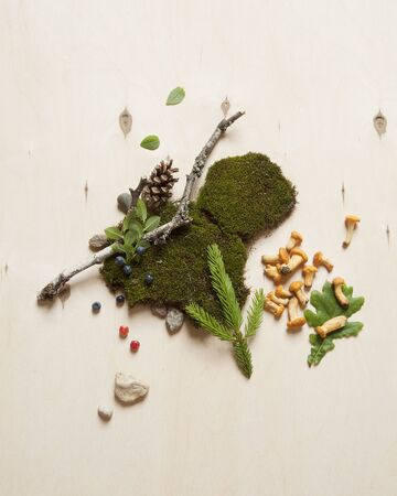 Forest berries, stones, mushrooms and tree branches on moss. Concept for ecologically friendly places and holidays in the countryside. Stock Photo