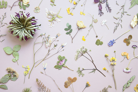 Various dried flowers and leaves on pastel background. Flat lay. Minimal floral postcard.