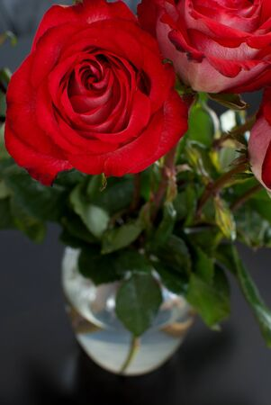 Roses in vase on black background vertical Stock Photo - 15033429