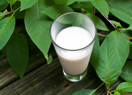 Milk and green leaves on background horizontal photo